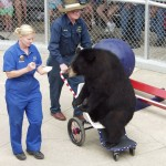 Clark's Trading Post Trained Bear Show